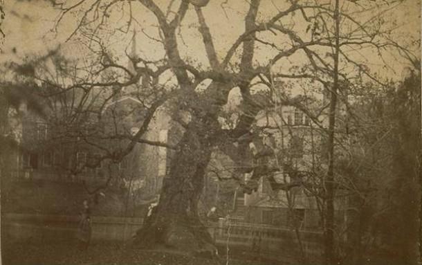 The Charter Oak before its fall