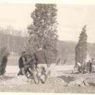 Workmen planting cedars in Stamford, Merritt Parkway landscaping, 1937 - Connecticut State Library, State Archives,  RG 069:036, Weld Thayer Chase Collection