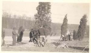 Workmen planting cedars in Stamford, Merritt Parkway landscaping, 1937