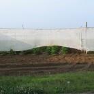 Shade grown tobacco, East Windsor