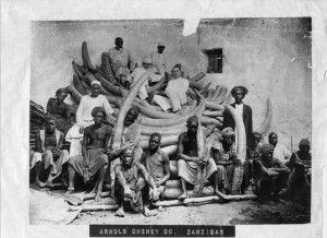 Elephant tusks and Zanzibar natives