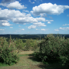 Apple Orchard, Middlefield