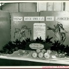Vegetable exhibit