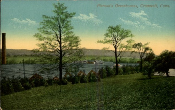 Postcard of Plant B, Pierson's Greenhouses, Cromwell