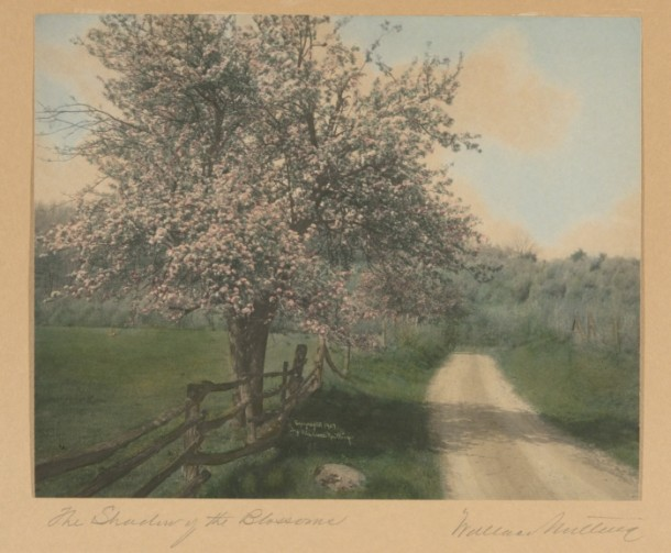 Wallace Nutting, The Shadow of the Blossoms