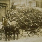 Wagonload of Christmas trees, Hartford, ca. 1890 - Connecticut Historical Society and Connecticut History Online