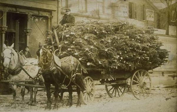 Wagonload of Christmas trees, Hartford