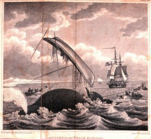 Dangers of the Whale Fishery