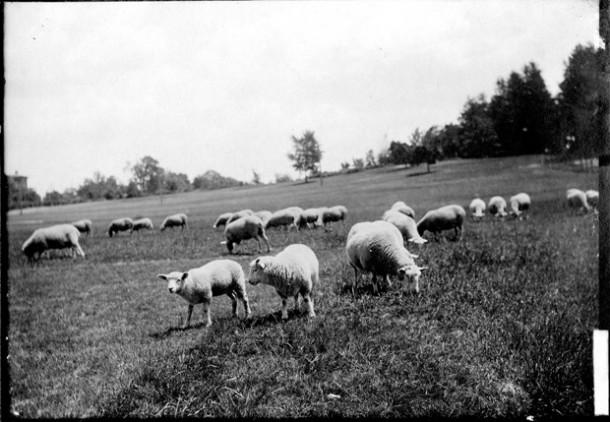 Keney Park Meadow, ca. early 1900s