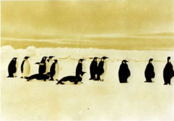 Penguins, 1933-35, Antarctic