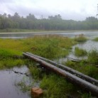 Pachaug Trail, Wiclcabouet Marsh, Voluntown