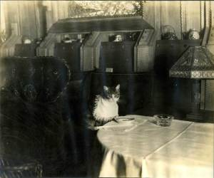 One of Gillette's beloved cats awaiting her dinner aboard the Aunt Polly. Courtesy of the Harriet Beecher Stowe Center.