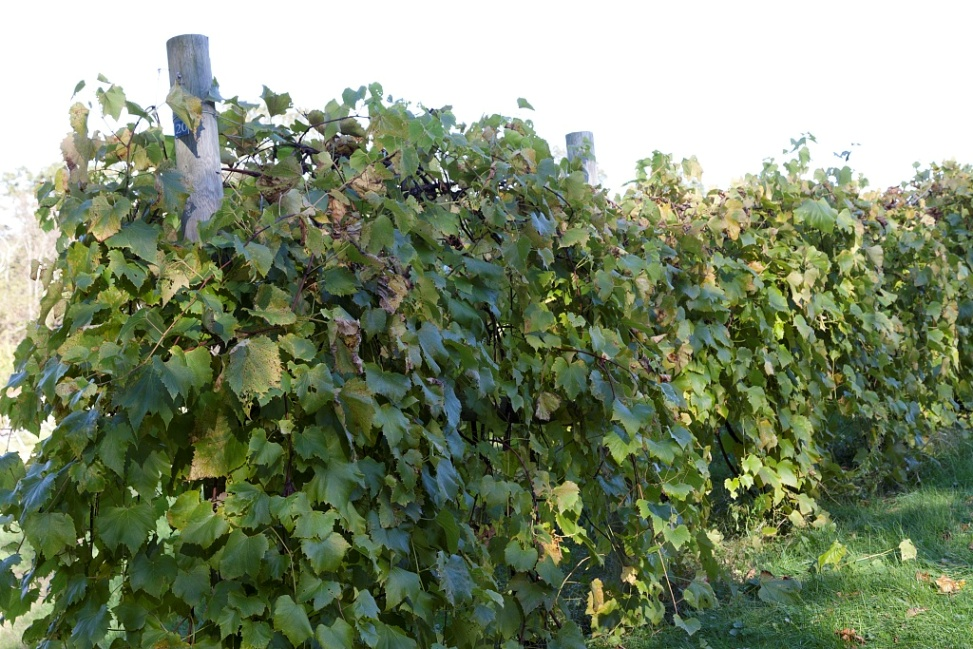Sharpe Hill Vineyard in Pomfret