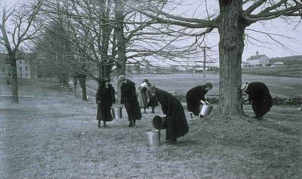 Connecticut Agricultural College coeds gathering maple sap for war effort
