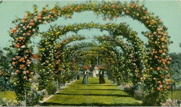 Rose Arches, Elizabeth Park