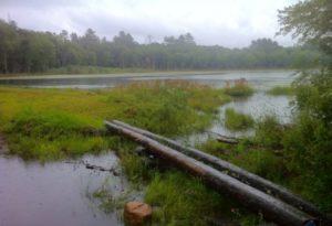Pachaug Trail, Wiclcabouet Marsh, Voluntown