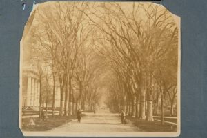 A View of Temple Street in New Haven